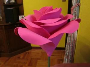 2013-06-08 goma eva, rosas gigantes (5)