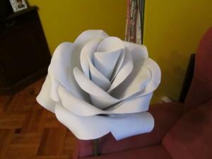 2013-06-08 goma eva, rosas gigantes (8)